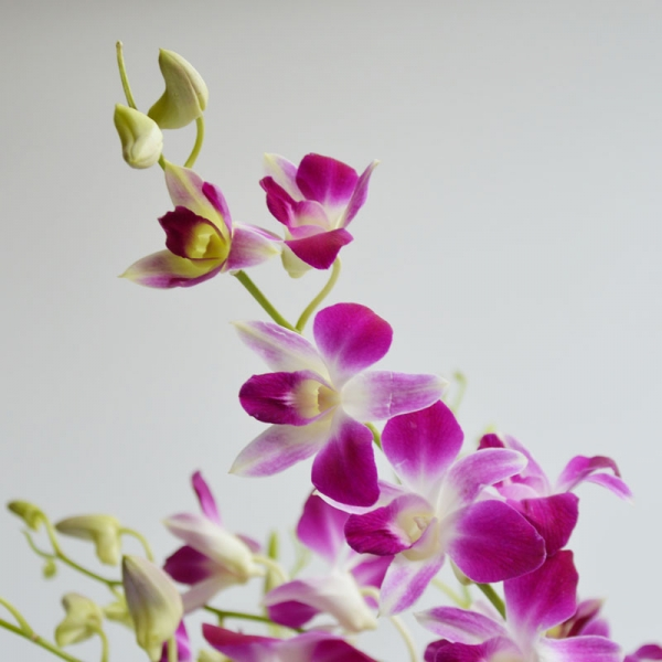 Bunchary Wrapped Orchids